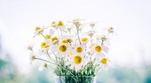 flowers-983897_1280