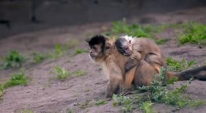 monkey-with-baby-741378_1280
